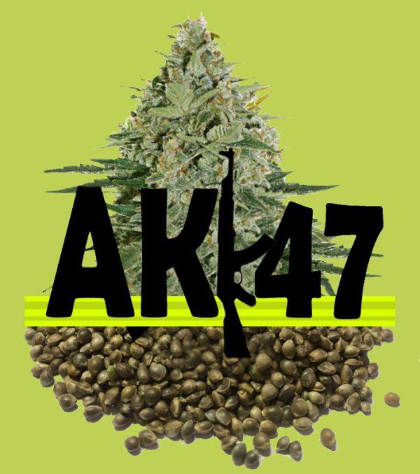 Buy AK-47 Cannabis Seeds (Feminized)