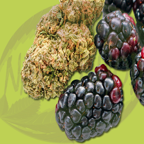 Buy-Berry-Exotic-Cannabis-Flowers(top shelf CBD flower, premium hemp flowers, wholesale cbd flower)