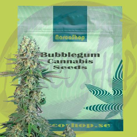 Buy Bubblegum Cannabis Seeds online(strain)