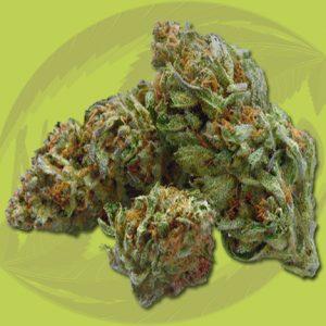 Buy OTTO cannabis Flower online