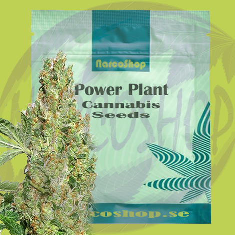 Buy-Power-Plant-Cannabis-seeds