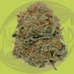 Buy Purple Cotton Cannabis Flower