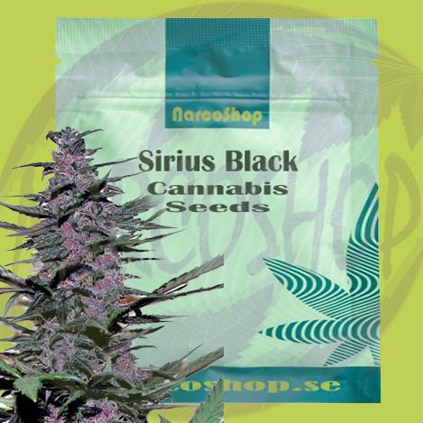 Buy-Sirius-Black-Cannabis -Seeds-Online