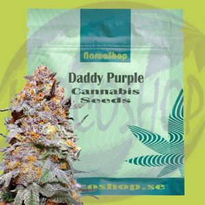 Grand Daddy Purple Cannabis Seeds