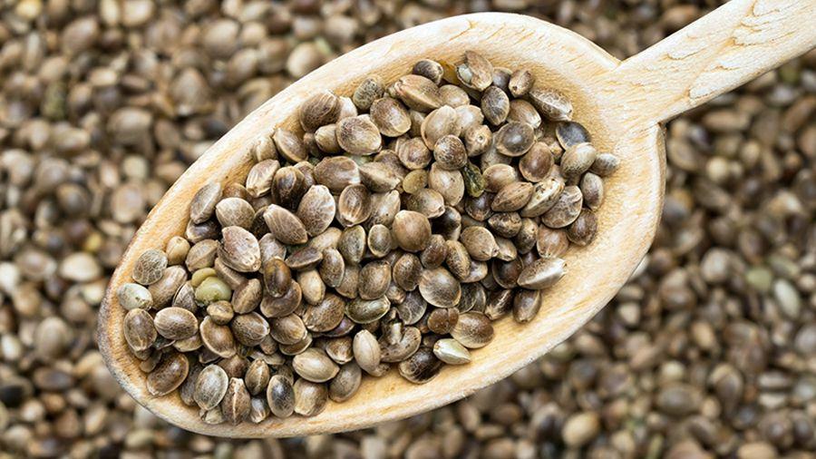 cannabis seeds