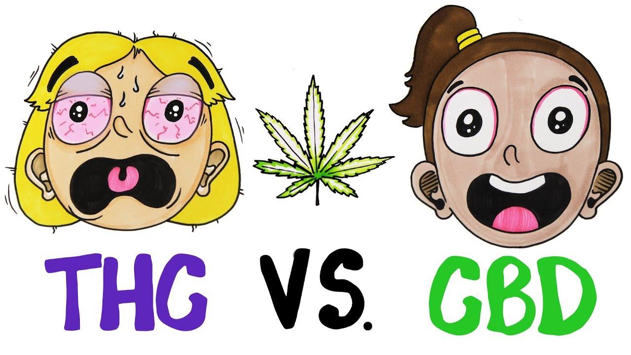 thc vs cbd